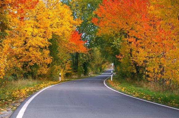 autumn-1001140_640